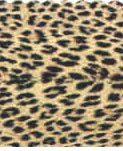 Leopard Print Tablecloths, Napkins, Runners & More!